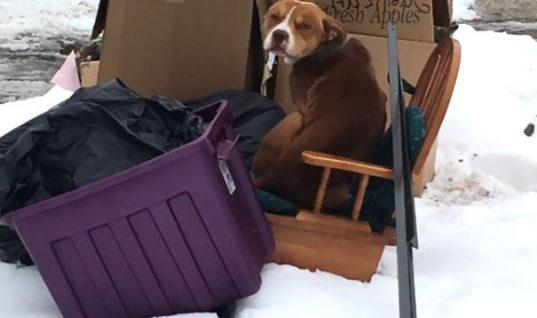 Τραγικοί: Μετακόμισαν και παράτησαν το σκύλο τους στα σκουπίδια αλλά εκείνος περίμενε να γυρίσουν!