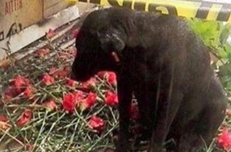 Συγκλονιστικό: Αδέσποτος σκύλος περιμένει μάταια τον νεκρό φίλο του αστυνομικό να γυρίσει