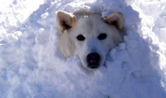 Ξεκαρδιστικές στιγμές με σκύλους που παίζουν στα χιόνια!