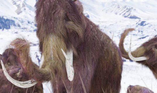 Τα μαμούθ θα επιστρέψουν σε 2 χρόνια λένε οι επιστήμονες του Xάρβαρντ!