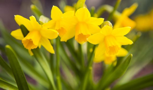 Θανατηφόρα φυτά που μπορεί να έχεις στον κήπο σου!