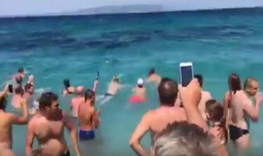 Σκόπελος: Δελφίνι κολυμπάει ανάμεσα σε λουόμενους! (Vid)
