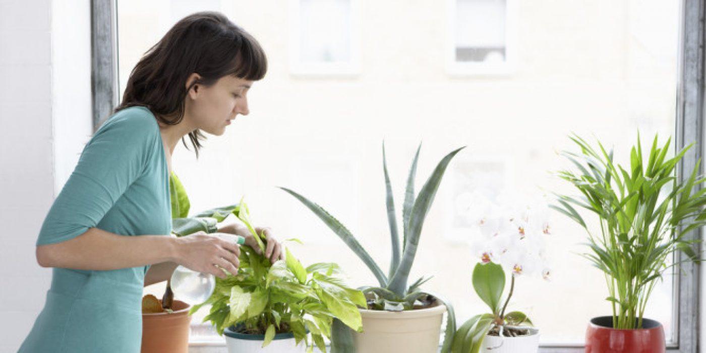 Καλύτερη ποιότητα αέρα μέσα στο σπίτι, αν έχετε αυτά τα φυτά εσωτερικού χώρου!